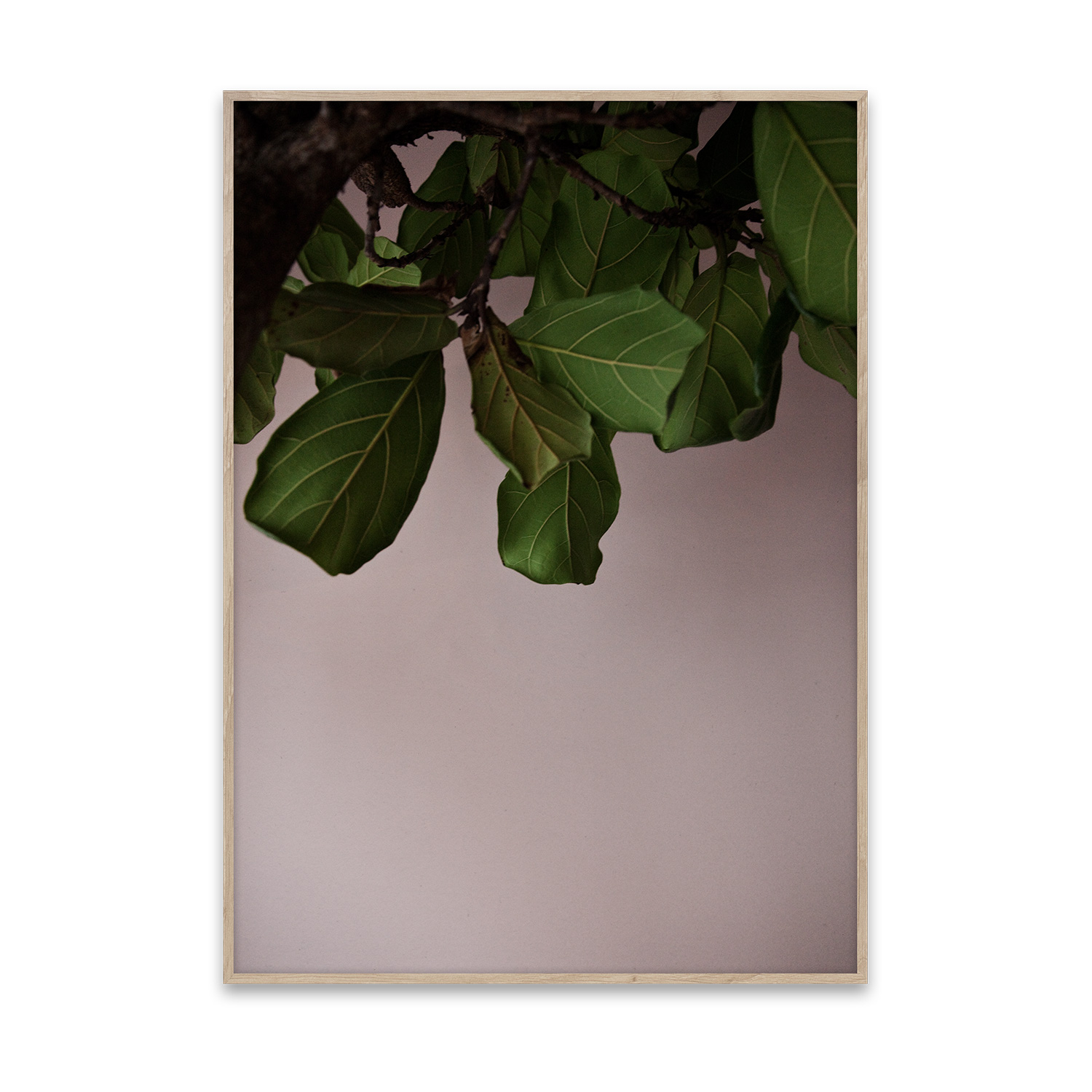 Green Leaves poster 50x70
