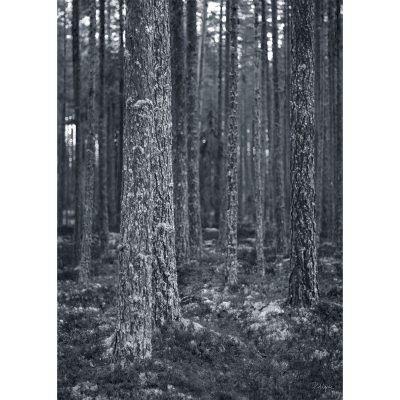 Bild av Behind The Pines poster, 70x 100
