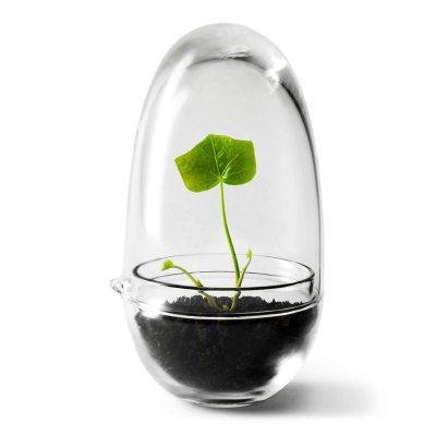 Grow miniväxthus