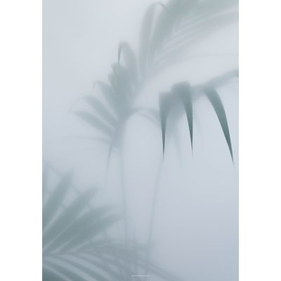 Palm I poster, 70x100