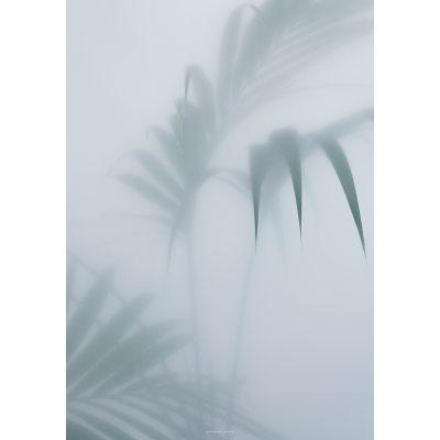 Palm I poster 70×100